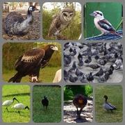 24th Jun 2015 - A few Birds.....