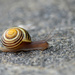 Slow and Steady! by fayefaye