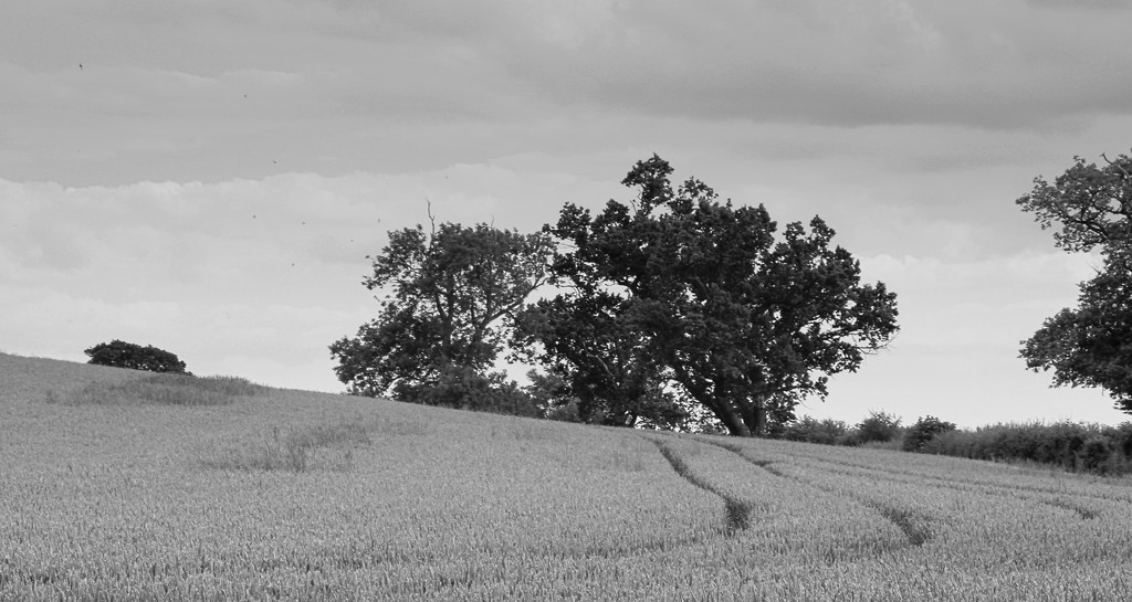 Oxton Field by phil_howcroft