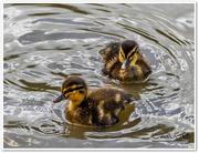 25th Jun 2015 - Two Little Cuties