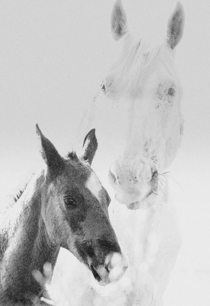 Black and White by kareenking