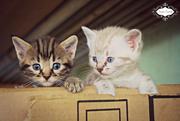 25th Jun 2015 - Kittens