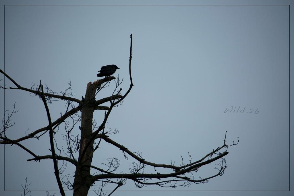 Crow's Watch by lyndemc