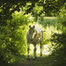 Summer in horsey land