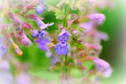 29th Jun 2015 - Flower fairy