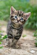 30th Jun 2015 - Kitten