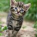 Kitten by sarahlh