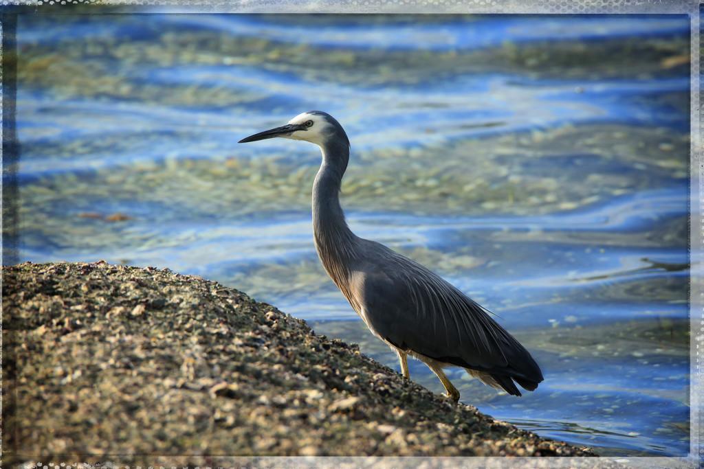 Heron by rustymonkey