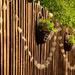 Morning Sun on the Garden Fence