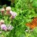 Butterflies everywhere... by julienne1