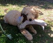 4th Jul 2015 - 'Teddy'