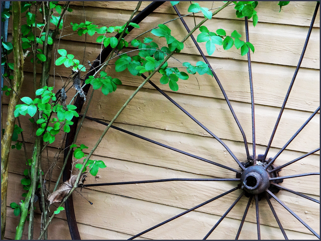 leaves and lines on meya's shed by aikimomm