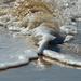 NEW Theme - WATER - #1 by gigiflower