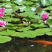 Life Under the Lily Pads