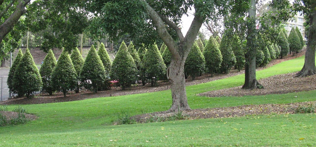 Shaped Conifers - Roma Street Parklands by loey5150