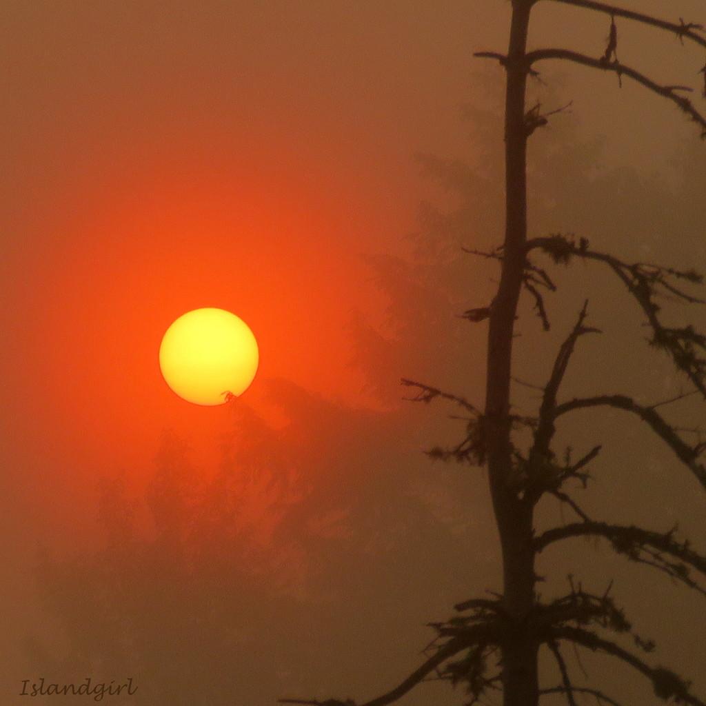 Sunrise through the Fog  by radiogirl