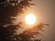 6th Jul 2015 - Hazy Sunrise