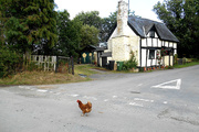 7th Jul 2015 - Why did the chicken cross the road?...