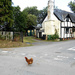 Why did the chicken cross the road?... by snowy