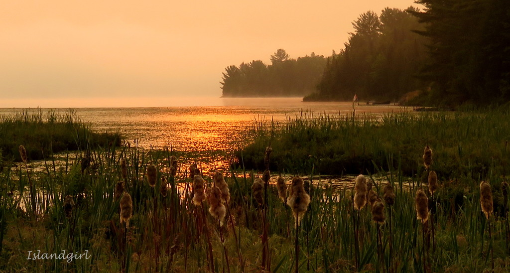 Early morning at the Marsh  by radiogirl