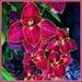 Colorful Coleus! by happysnaps