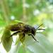 Bee by shirleybankfarm