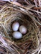 9th Jul 2015 - Bird Nest