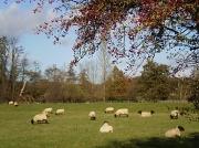 14th Nov 2010 - Counting sheep.1 2 3 .........Zzzzzz