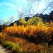 Fall in the Rockies by suelbiz47