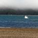 Dolphins ahoy by kiwinanna