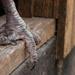 Turkey Feet by epcello