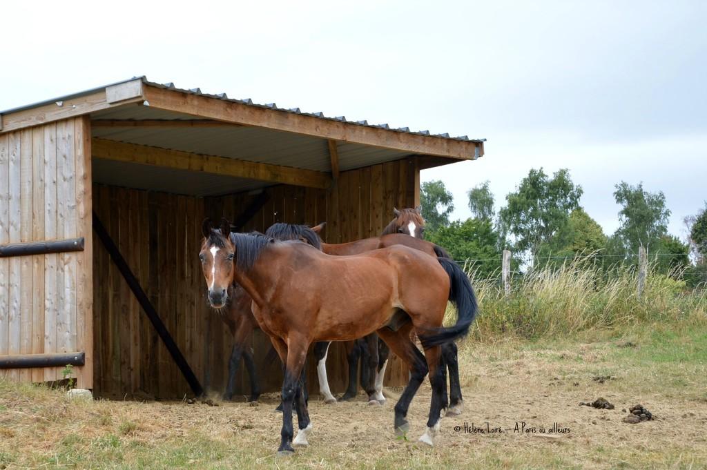 horses along the road by parisouailleurs