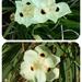 Wild Butterfly Iris. by happysnaps