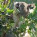 Nom nom nom by koalagardens