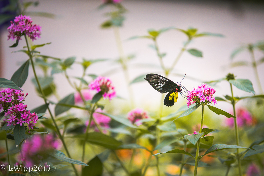 Wildflower Wonders by lesip
