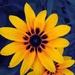 Yellow Flower by dianen