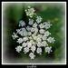 Snowflake by essiesue