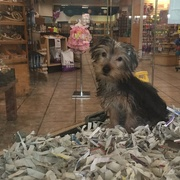 18th Jul 2015 - How Much Is That Doggie In The Window?