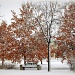 Fall or winter?? by pfmandeville