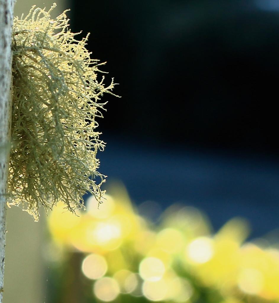 Yellow mellow lichen by kiwinanna