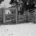 Kangaroo tracks at the cattle press by peterdegraaff
