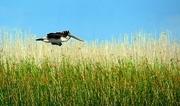 19th Jul 2015 -  Marsh Gliding