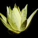 Was It the Water Lily or the Waterdrops? by milaniet