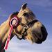 Price Pony :)