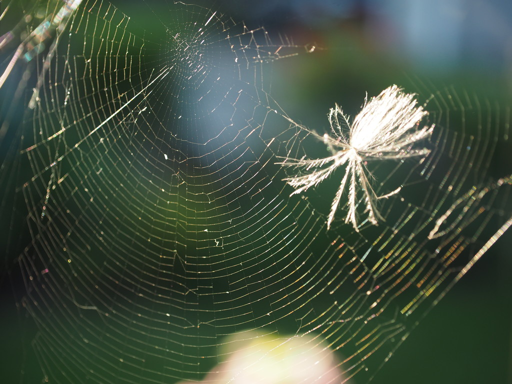 The Web by selkie