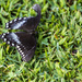 Hurt Butterfly