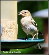 22nd Jul 2015 - That's a big seed for a little bird