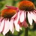 Daisy, daisy.... by bizziebeeme