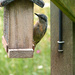 Nuthatch by shirleybankfarm