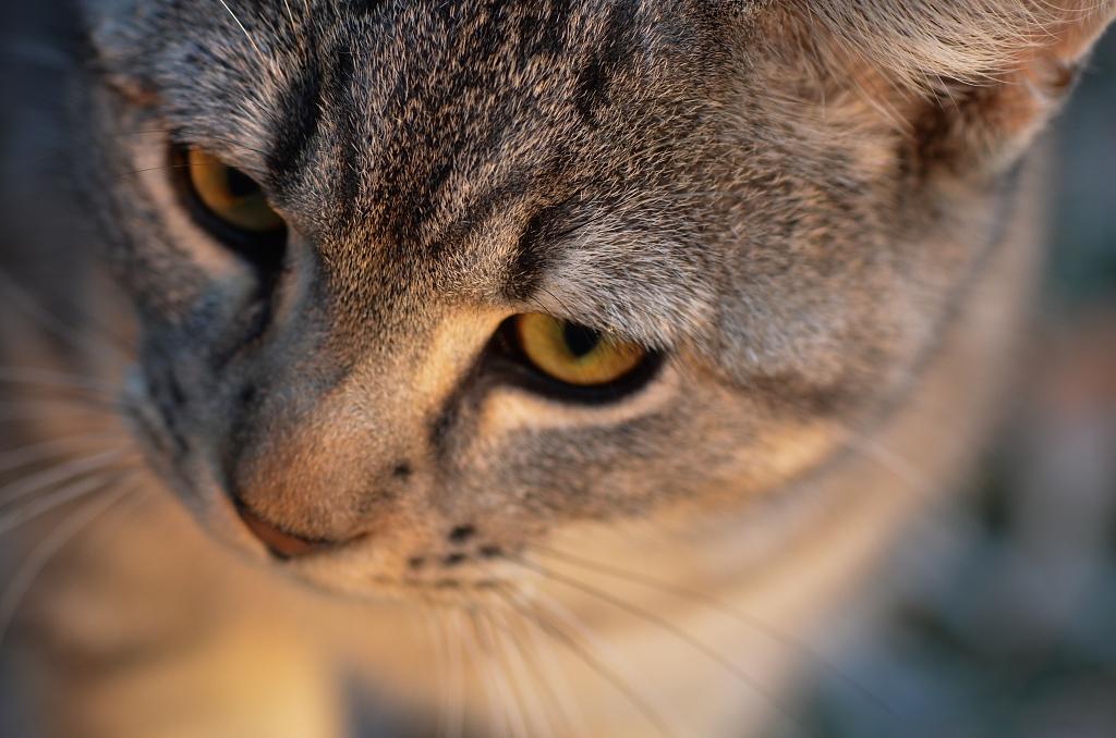 kittykitty by bluemoon